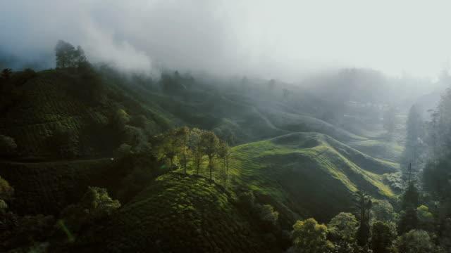 stockvideo's en b-roll-footage met luchtfoto van theeplantages bij zonsopgang - maleisië