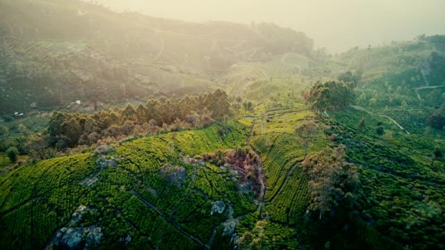 vídeos de stock e filmes b-roll de aerial view of tea plantations - fitoterapia