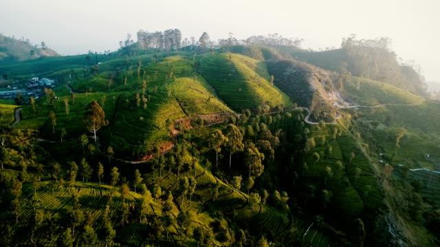 vídeos de stock e filmes b-roll de aerial view of tea plantations - sri lanka