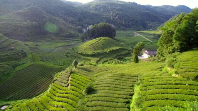 luftaufnahme von teeplantagen, hubei, china. - grüner tee stock-videos und b-roll-filmmaterial
