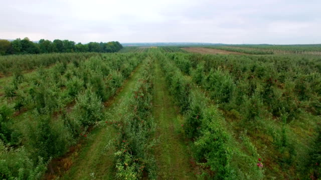 Aerial view of the apple garden video