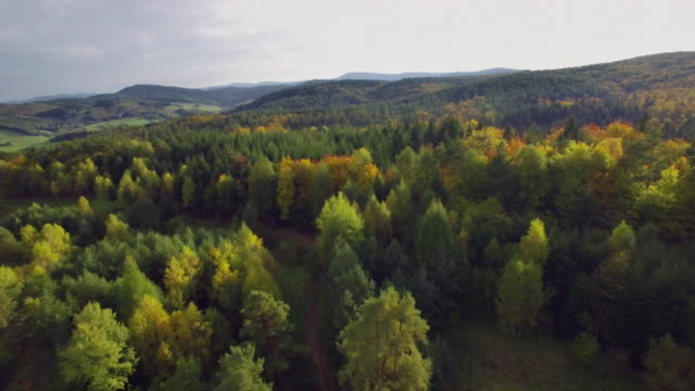 aerial view of the autumnal forest. pines and maples - польша стоковые видео и кадры b-roll