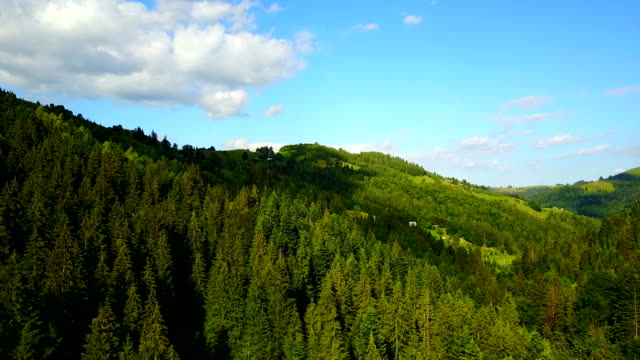 Aerial view of the Carpathian forest, Ukraine. Drone flight video