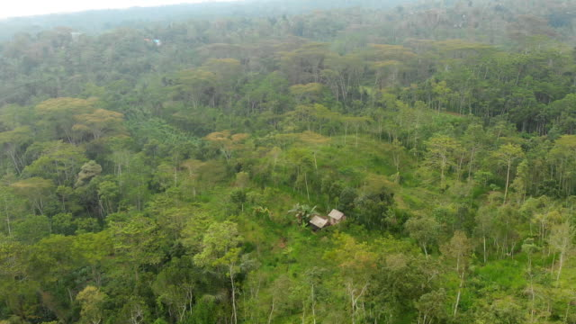 aerial view of the forest and jungle of bali island. indonesia - юго восток стоковые видео и кадры b-roll