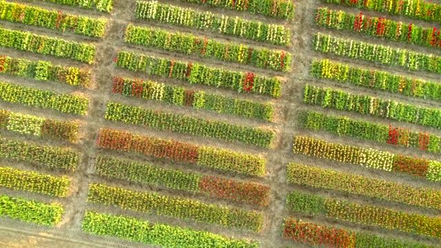 リッセ, オランダのキューケンホフ植物園でヨーロッパの庭園の眺め. - オランダ点の映像素材/bロール