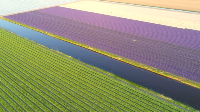 Aerial view of The Garden of Europe at Keukenhof botanical garden in Lisse, Netherlands. Aerial view of The Garden of Europe at Keukenhof botanical garden, Netherlands. tulip stock videos & royalty-free footage