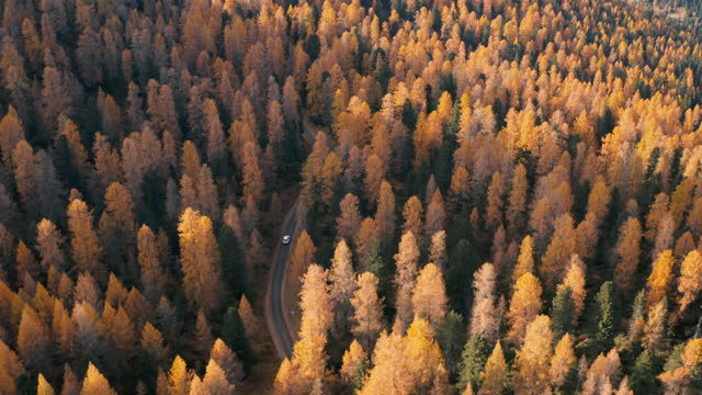 Aerial view of the Italian Alps, car driving in the forest on a sunny autumn video