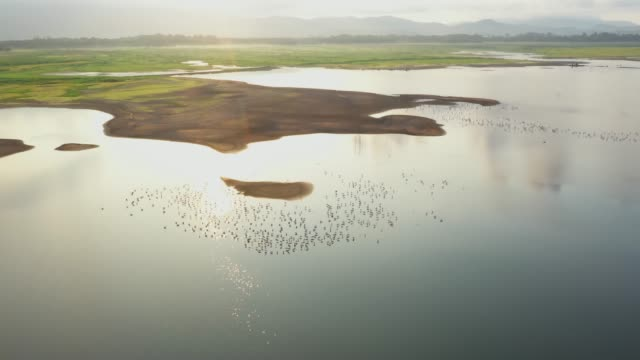 Aerial view of the lake, with a flock of birds on the water, beautiful sunlight and shadows reflecting the clouds. video