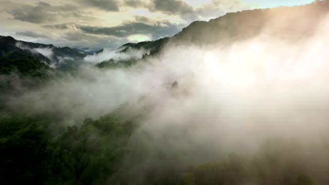 vidéos et rushes de vue aérienne de la montagne lush green rain forest - chaîne de montagnes