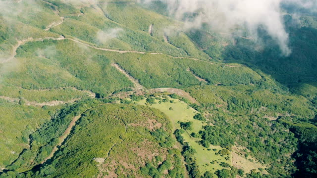 aerial view of the mountain evergreen forest - pianta sempreverde video stock e b–roll
