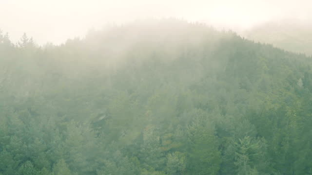 aerial view of the mountain evergreen forest with fog - pianta sempreverde video stock e b–roll