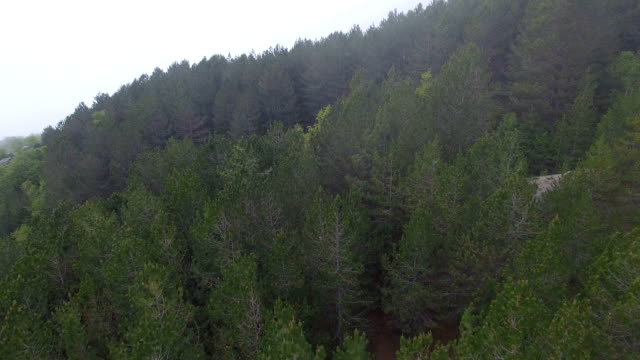 aerial view of the pine forest in the mountains video