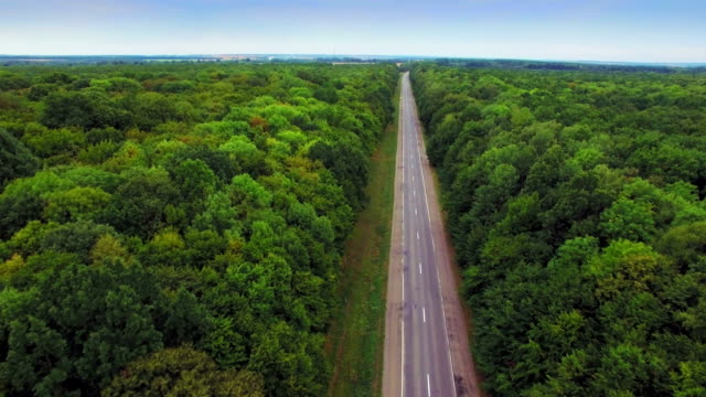 Aerial view of the road through green forest. video