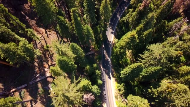 Aerial view of the Sequoia National park forest from above
