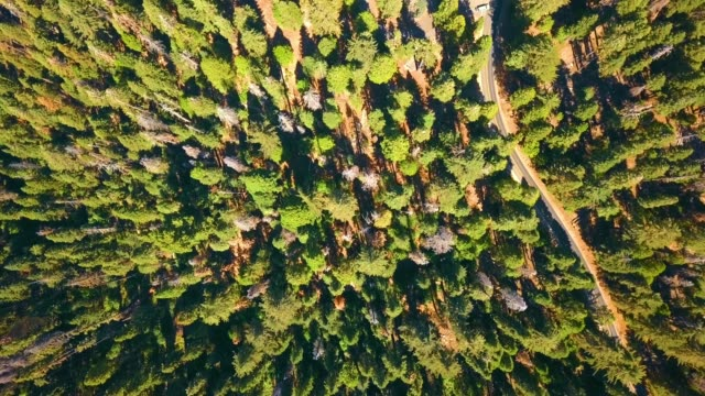 Aerial view of the Sequoia National park