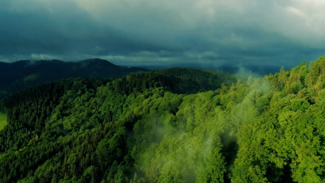 Aerial view of the summer forest video