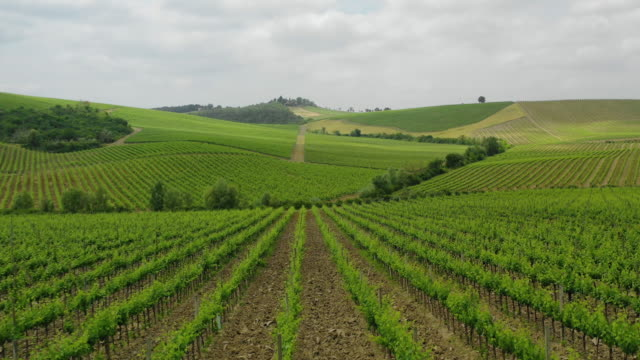 Aerial view of the vineyards and hills