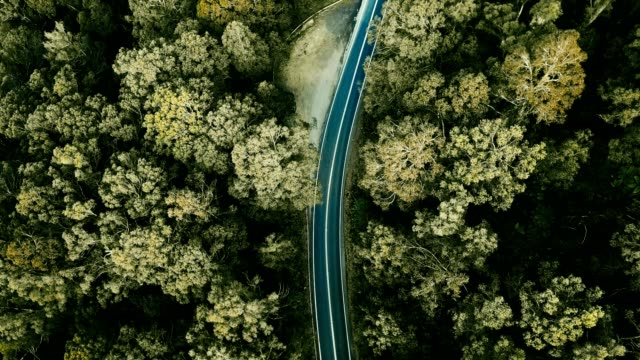 aerial view of the winding road in australia