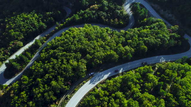 Aerial view of thick forest in autumn with road cutting through Aerial view of thick forest in autumn with road cutting through curve stock videos & royalty-free footage