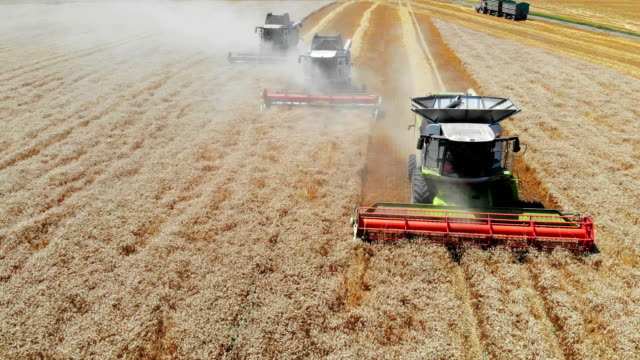 aerial view of three combine harvesters - trattore video stock e b–roll