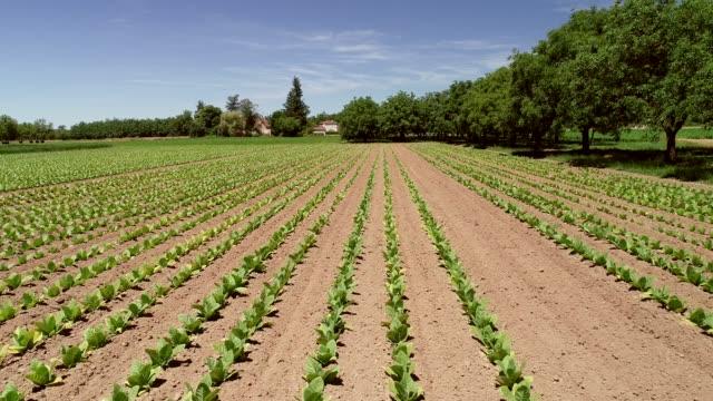 tütün tarım hava görünümünü. - nikotin stok videoları ve detay görüntü çekimi