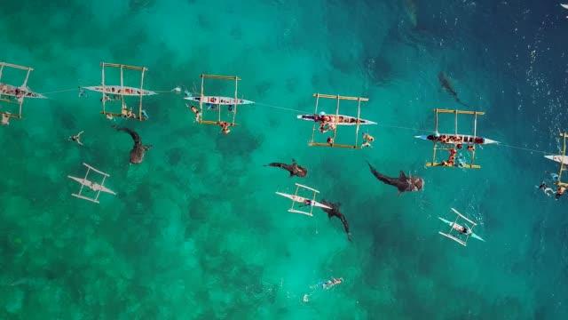 vista aerea dei turisti che nuotano con squali balena, oslob, filippine. - filippino video stock e b–roll