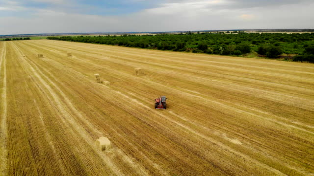 aerial view of tractor with special pitchfork rides on field and stores bales of straw - orzo video stock e b–roll