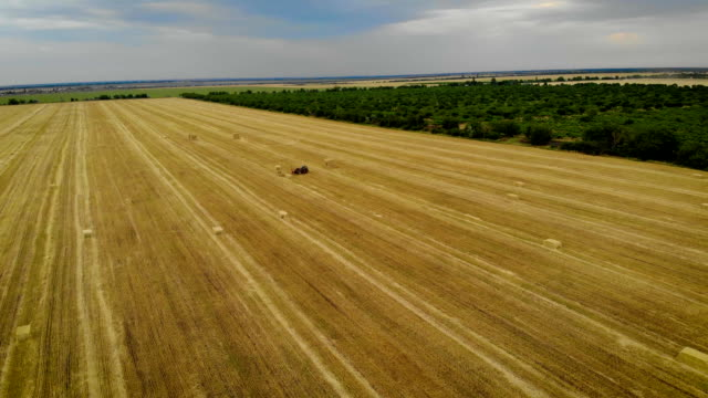 aerial view of tractor working on farm collects straw with special pitchfork in yellow field - orzo video stock e b–roll