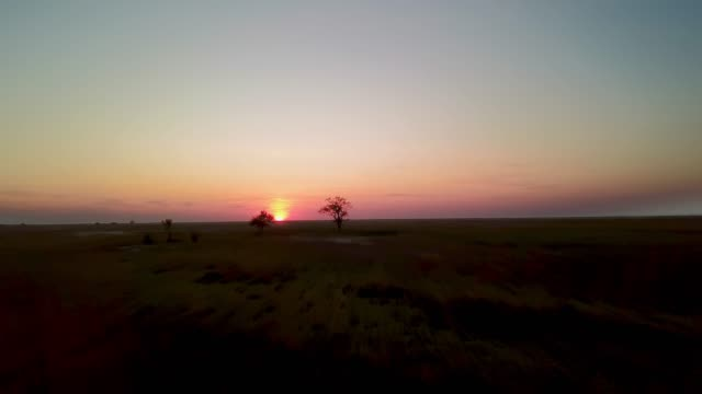 aerial view of Tree at sunset in prairie Lonely tree at sunset in prairie, tree at sunset in the steppe, sunset in prairie horizon over land stock videos & royalty-free footage