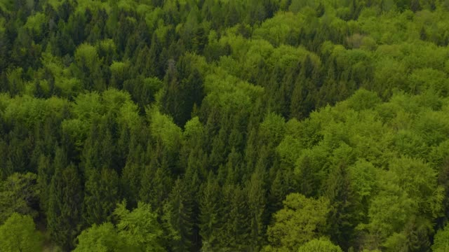 Aerial view of trees around the lake Ammersee in Germany, video