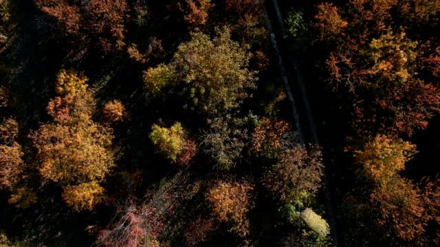 vidéos et rushes de vue aérienne des arbres dans les couleurs d'automne - couleur saturée