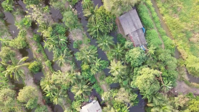 aerial view of tropical garden sunset moment bangkok thailand - wood texture filmów i materiałów b-roll