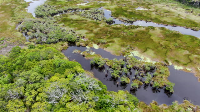 Video Aerial view of tropical rain forest, jungle in Brazil.