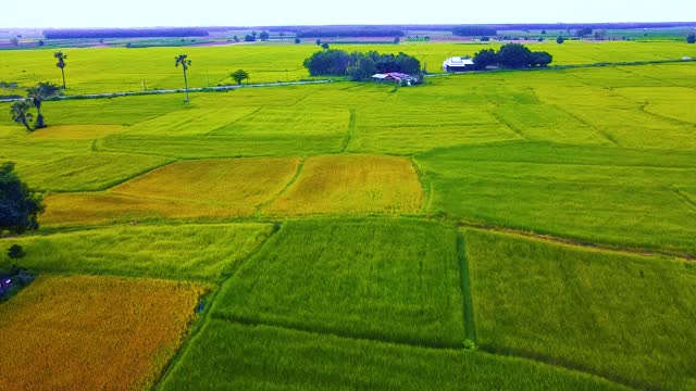 Aerial view of twins palm tree from Tay Ninh province of Vietnam country and rice field with a beautiful mountain.