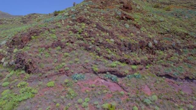 Aerial View of typical flora ( Succulent plant ) near by  San Sebastián de La Gomera on Canary Islands La Gomera video