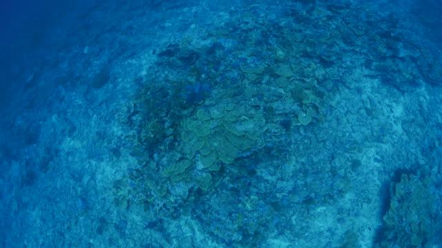 vídeos y material grabado en eventos de stock de vista aérea de arrecife de coral submarino - zona pelágica