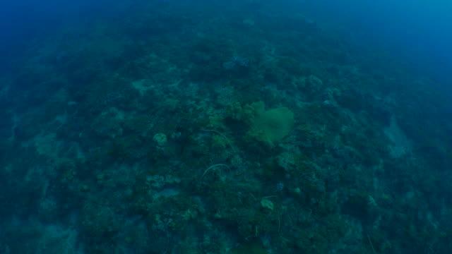 Aerial view of undersea coral reef Liuqiu Island, Taiwan - Mar 10, 2018 : Recreational scuba diving underwater (2018_0310_0311-0310_1616_A) ocean floor stock videos & royalty-free footage