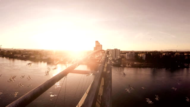 aerial view of urban scenery at sunset video