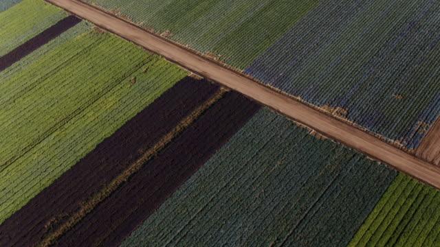 luftaufnahme von verschiedenen arten von landwirtschaft ernte-feldern von oben geschossen - grünkohl stock-videos und b-roll-filmmaterial