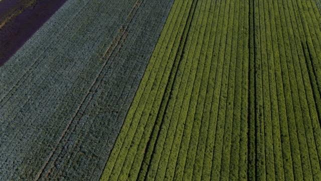 stockvideo's en b-roll-footage met luchtfoto van verschillende soorten landbouw gewas velden schot van bovenaf - floral line