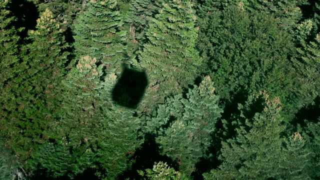 Aerial view of vibrant green forest video