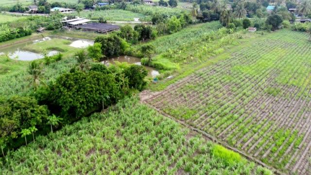 aerial view of village on farming area - canna da zucchero video stock e b–roll