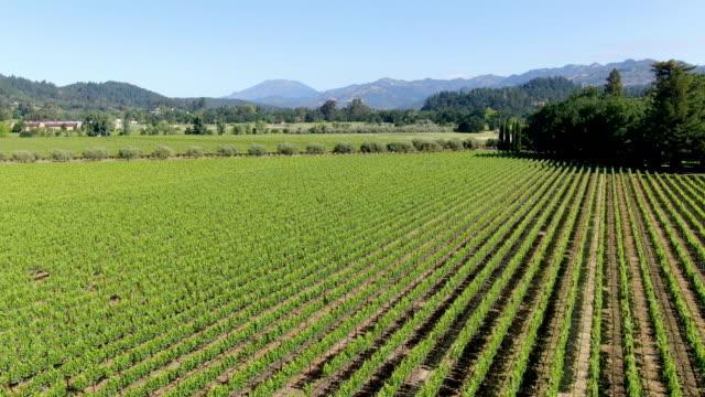 Aerial view of vineyard in Napa Valley during summer season.