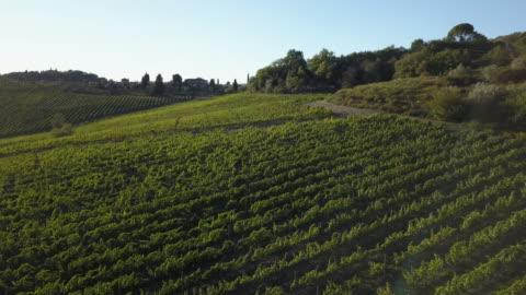 vidéos et rushes de vue aérienne de paysage de vignoble au coucher du soleil - italie