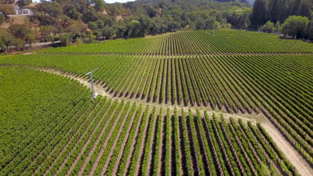 Aerial view of vineyard
