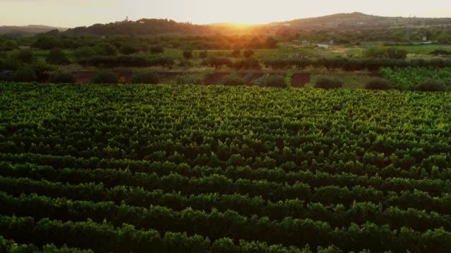 aerial view of vineyards in croatia. - хорватия стоковые видео и кадры b-roll