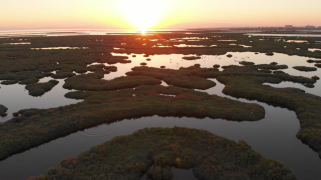 Aerial View of Wetland and Flamingos During Sunset Izmir, Turkey wetland stock videos & royalty-free footage