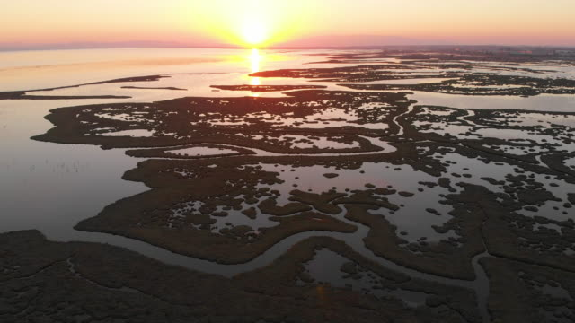aerial view of wetland and flamingos during sunset - болото стоковые видео и кадры b-roll