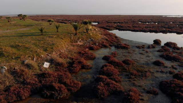 aerial view of wetland - болото стоковые видео и кадры b-roll