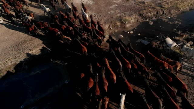 Aerial view of wild horses video